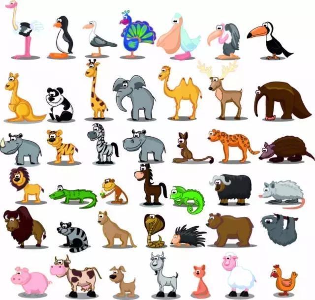 宝宝学习英语|小动物开森林大会,快来集结啦!