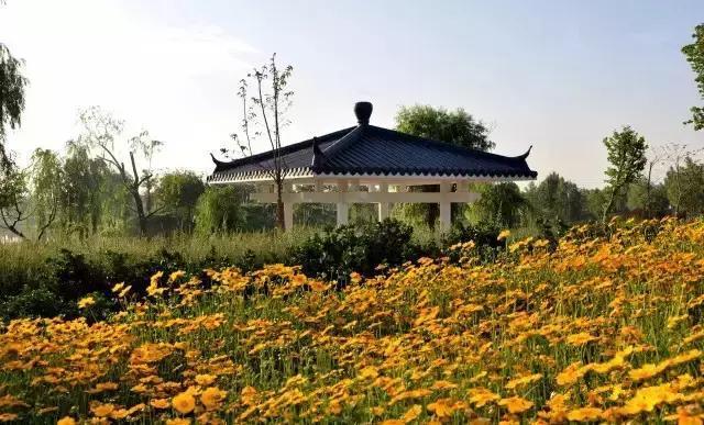 通过济阳黄河大桥,抵达澄波湖风景区.