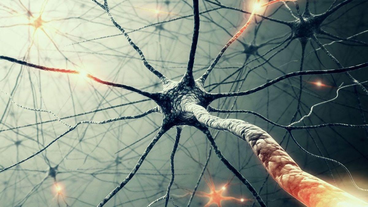 组胚红蓝铅笔绘图神经元