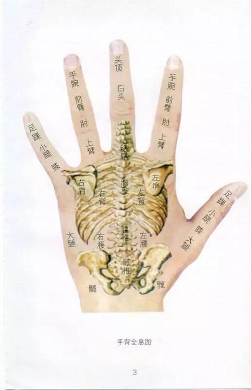 人体大胆美穴_人体全息穴区图解,看看会发现,中医真的很神奇!