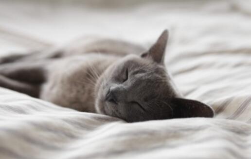 """先搞清楚自己是哪一种""""睡眠动物""""吧."""