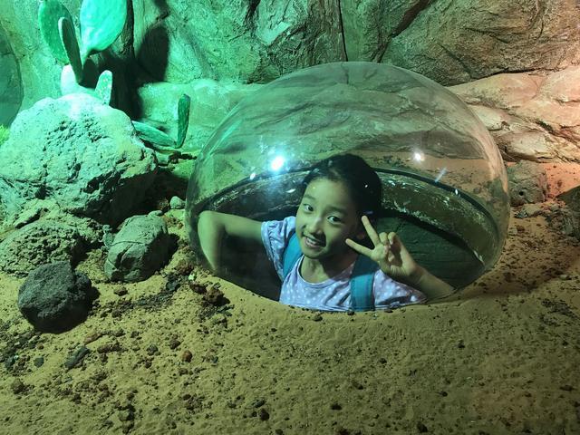 逛新加坡动物园可以学英语?my favourite animal