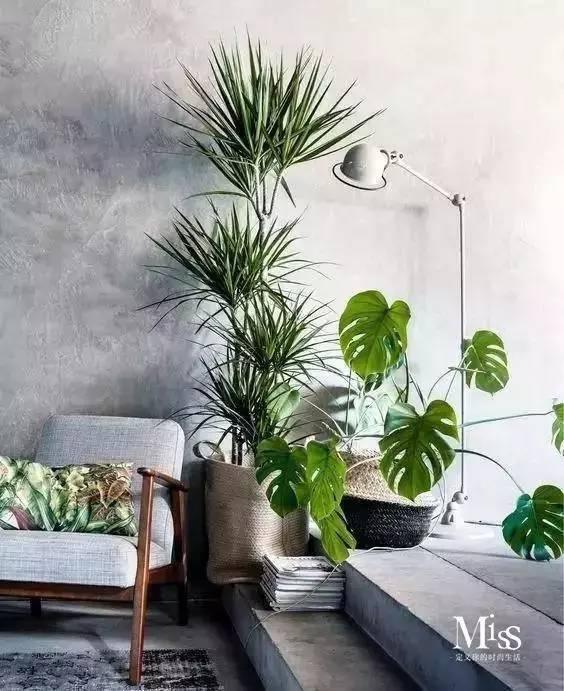 植物算是ins家居中最常见的装饰,清爽的绿色可以让整个空间显得清新又图片