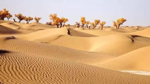 旅游 正文  位于新疆南疆的塔里木盆地中心,是中国最大的沙漠,也是