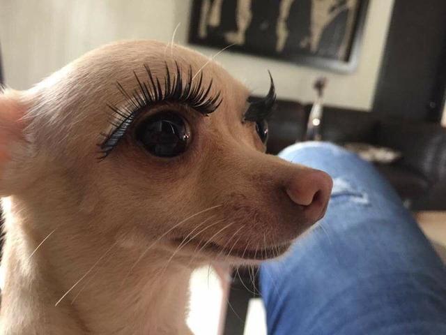 综狗人体艺术_搞笑图片:女神家的狗狗,秒杀多少单身狗!