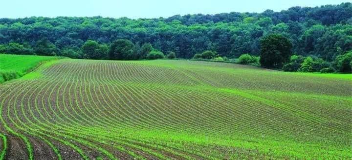 14亿人口中多少农民_怀化罗旧镇多少人口