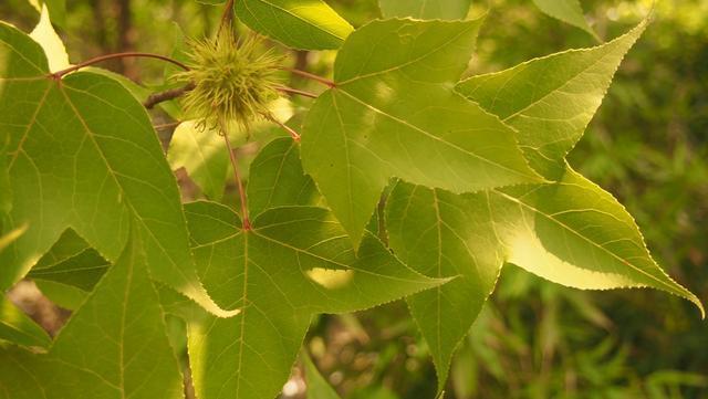 背景 壁纸 花 绿色 绿叶 树叶 植物 桌面 640_361图片