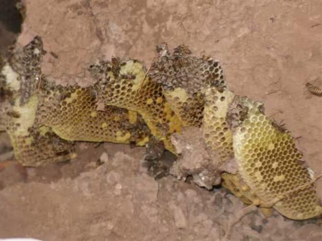 采完教案了蜜蜂蝴蝶艺术小小花小班蜂蜜图片