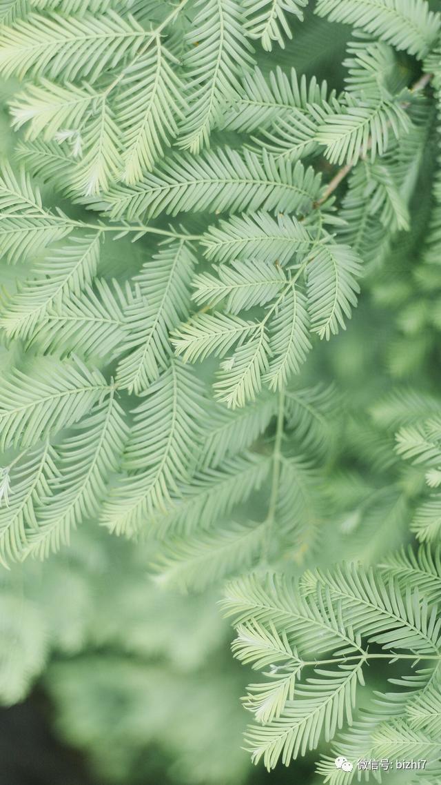 护眼壁纸,小清新绿色植物图片