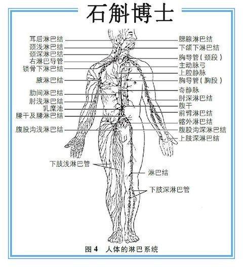 人体淋巴结分布�_健康 正文  人体的淋巴系统 淋巴结有个这样的规律: 身体的哪个部位有