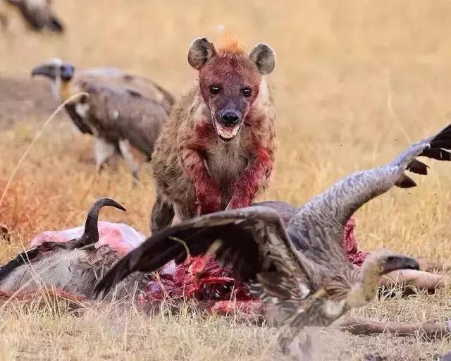 丑到只有妈妈爱de非洲动物