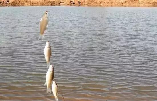 手竿使用串钩,海竿在近距离深水或水库大坝附近的深水区垂钓.