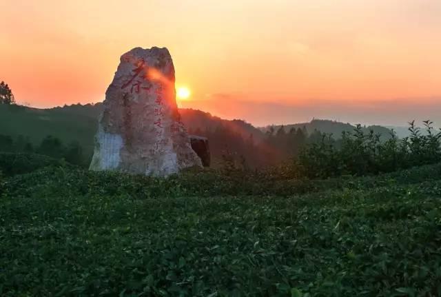 原标题:茶旅世界十大魅力茶乡丨贵州省黔东南州黎平县 黎平县位于黔、湘、桂三省(区)交界之处,面积4441平方公里,森林覆盖率74.6%,是世界非物质文化侗族大歌的原生地,国家级风景名胜区、国家级森林公园、国家湿地公园、中国革命老区、中国名茶之乡。具有冬无严寒、夏无酷暑、雨热同季、多云雾、寡日照、昼夜温差大等气候特征,地处云贵高原向丘陵地带过渡区,土壤深厚肥沃,生态植被良好,无污染,是建设原生态、高品质、有机茶园的最适宜区之一。  杨梅井茶叶基地  苦李井大坡茶园