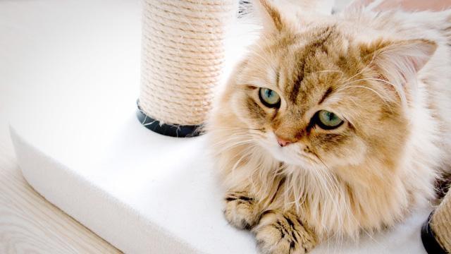 猫细小病毒_腾讯网