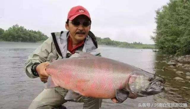 哲罗鲑鱼 想体验奇妙的海钓之行吗?图片