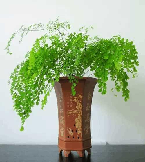 植物可先取黄玫瑰,黄康乃馨,黄素馨等,以桔黄色为主,增加食欲,促进