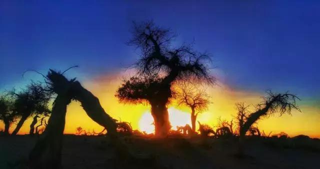 去怪树林见证枯树生命力的顽强