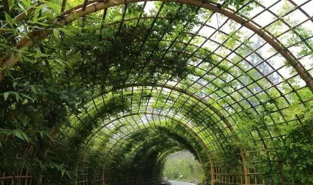 济南植物园:竹林深处有美景