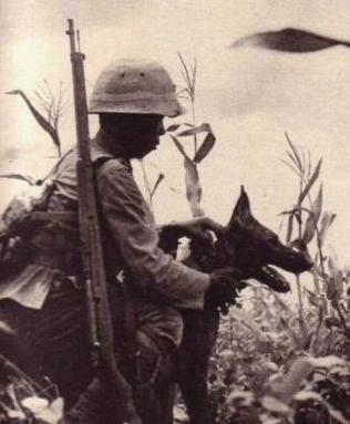 八一建军节特篇 中国军犬知多少图片