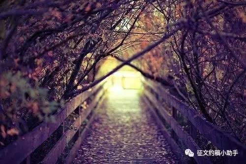 """""""南湖之声杯"""" 第四届诗歌散文有奖征文大赛启事"""