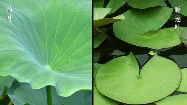 折叶子的步骤和图解