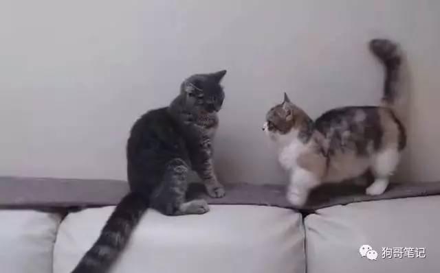 小黑猫和小花猫又吵架啦,这次小黑猫放下狠话,说自己一只爪子就能干倒