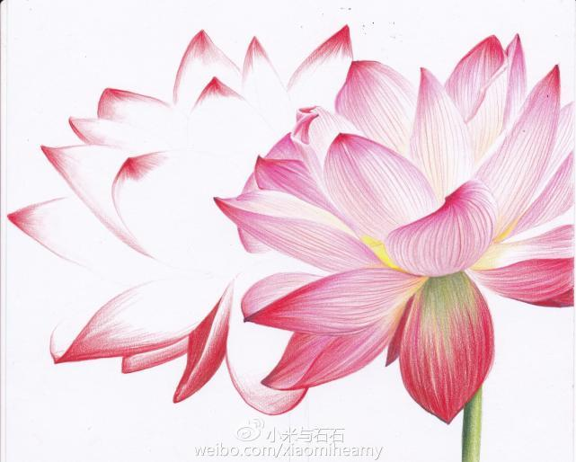 零基础彩铅绘画教程,荷花与桃子彩铅画法步骤