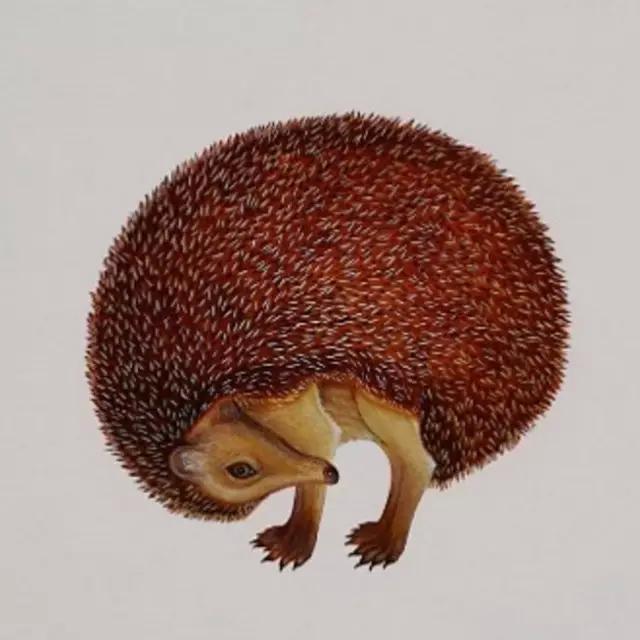 文化 正文  英国艺术家 whyn lewis 创作了一系列细腻生动的动物画