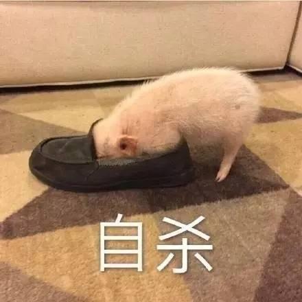 看完这片,我要开始撸猪了!