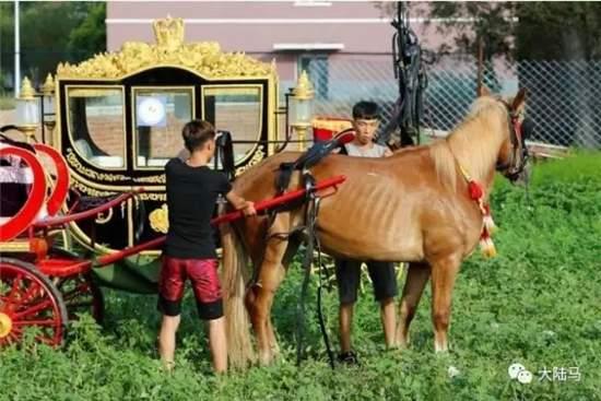 莱德马术学院打造高颜值 骑骏队 皇家马车队
