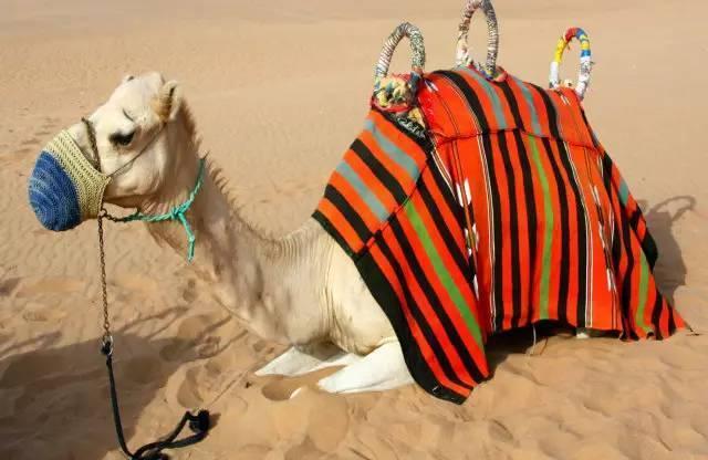 拉伯水烟料_错过这个,等于白来迪拜!