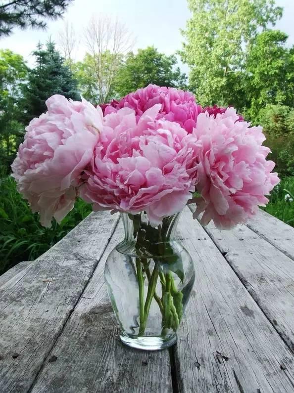 全世界最美的花图片