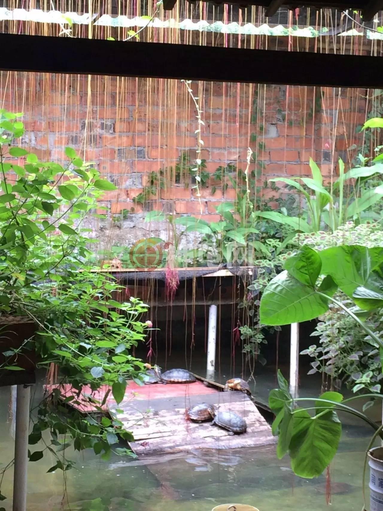 龟池建造术|石金钱龟室外池设计四川众铭建筑设计有限公司图片