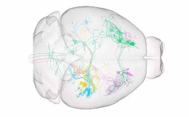 近十年以来神经工程学的全球研究亮点