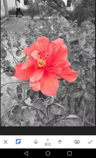 浮力摄影教程 Snapseed局部色彩处理 超实用,一学就会