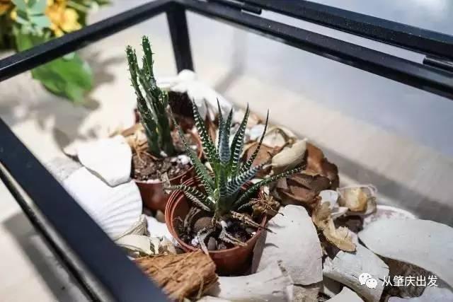 盆景 盆栽 植物 640_427