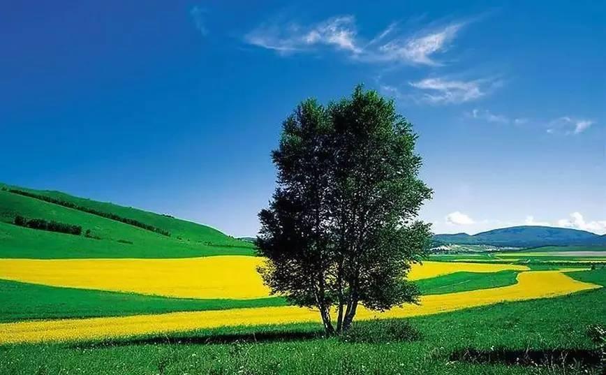金色的主 体,绿色的配角们,红色的道路 但在夏天,绝大部分树木清一色
