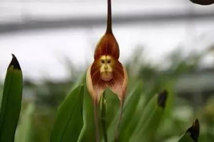 自然界这些萌萌的植物,你见过哪个?