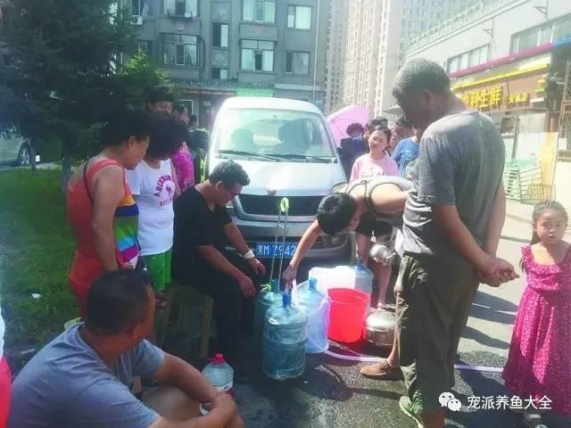 停水两三天!用鱼缸水冲马桶,把宠物鱼送朋友家寄养图片