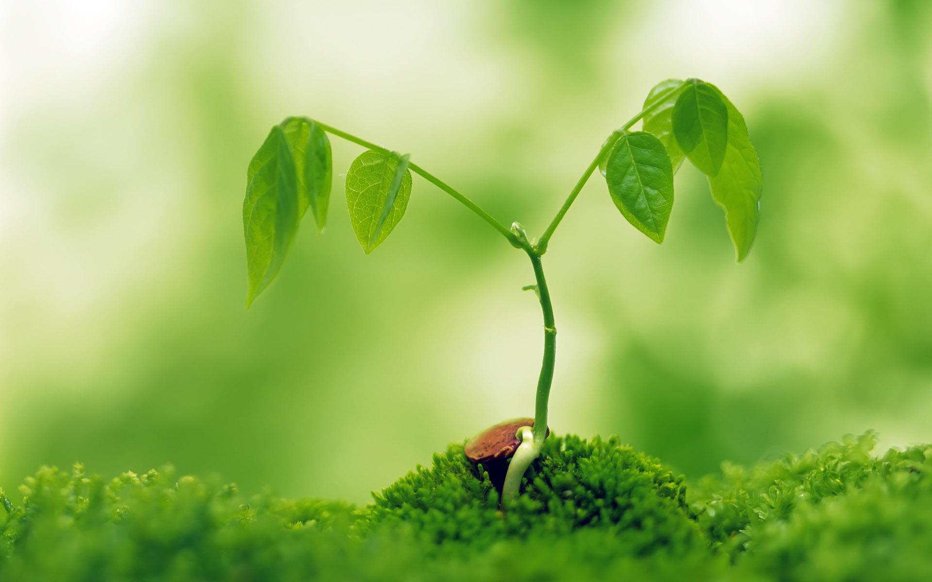 ppt 背景 壁纸 电脑桌面 发芽 绿色 绿色植物 嫩芽 嫩叶 新芽 植物 桌图片