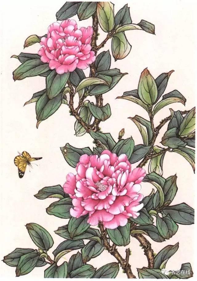 国画技法:茶花工笔画法示范