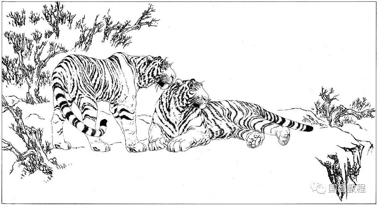 老虎白描合集