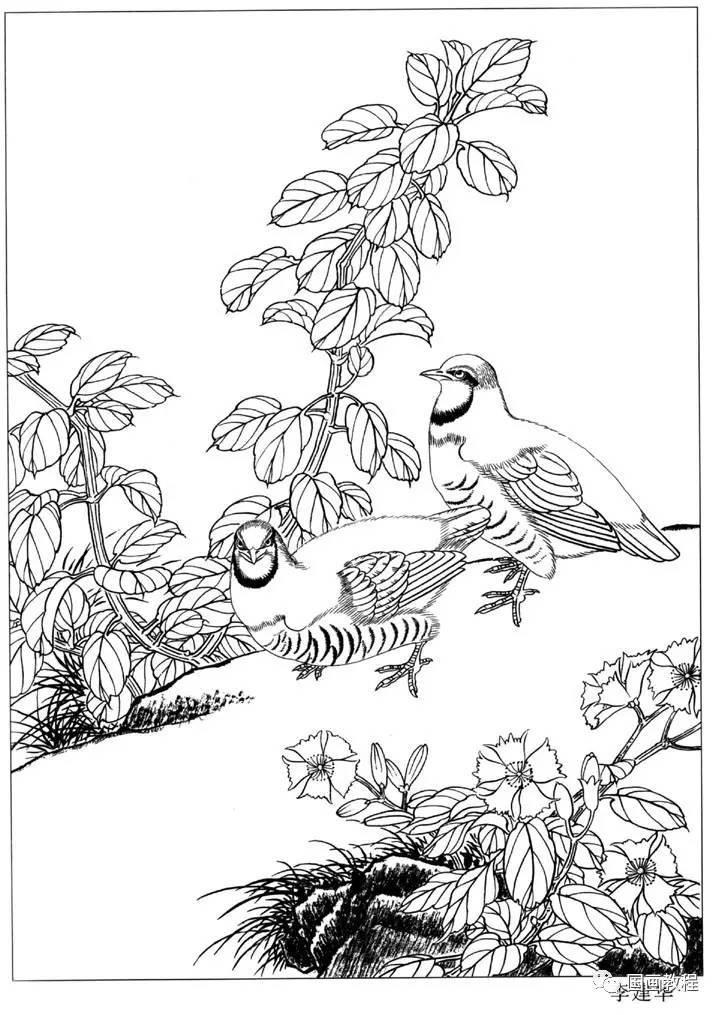 工笔画合集,涵盖花,鸟,虫,鱼动,物,人物,佛像,壁画各类白描,临摹素描