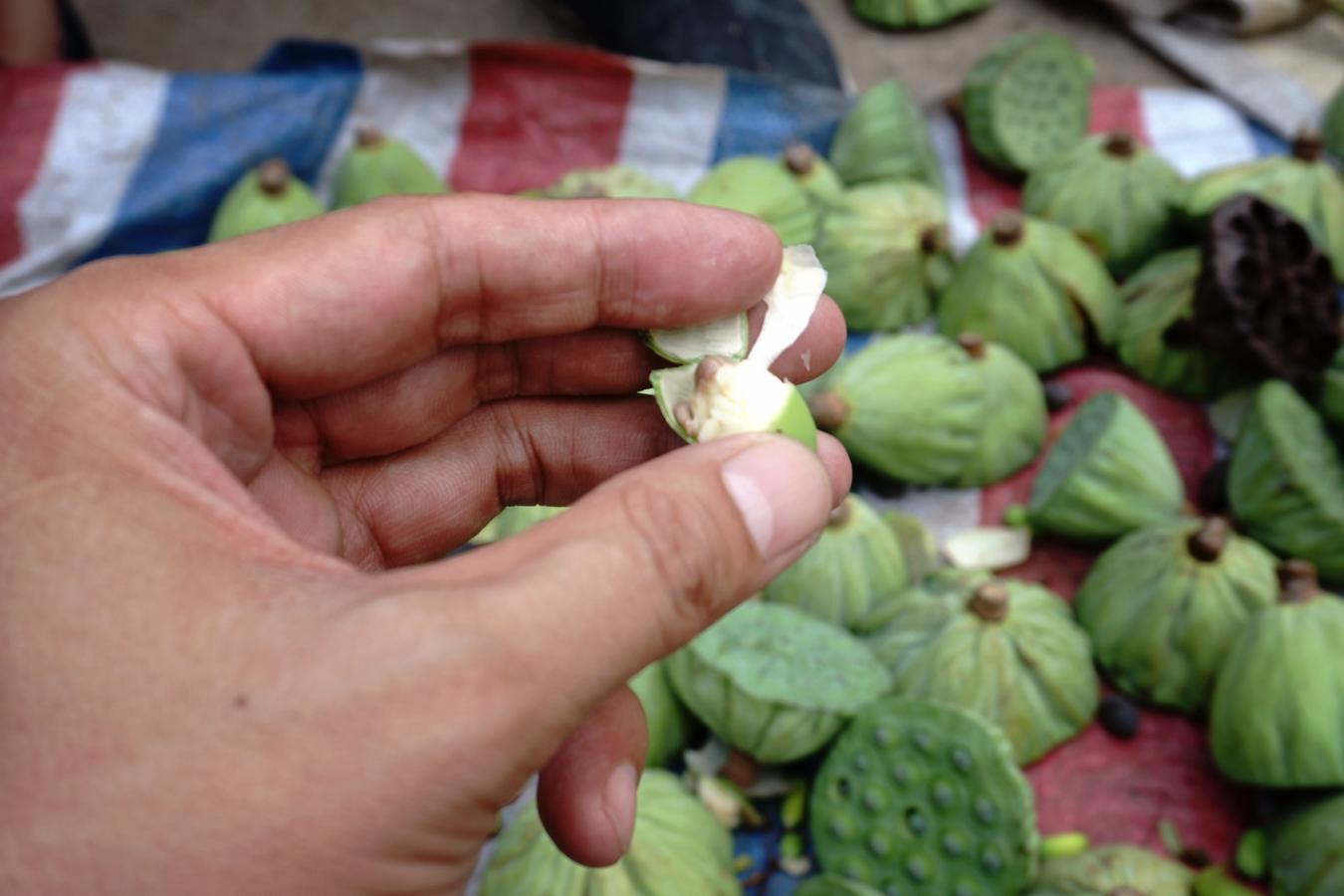 农村老人早市卖河里采摘的 水果 ,一元一个,很多人没见过