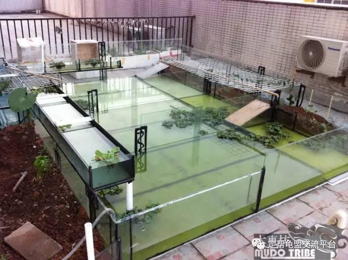 绿化和搭棚有待进一步建设,至于龟的容量 先上一个最近的图: 按步骤来图片