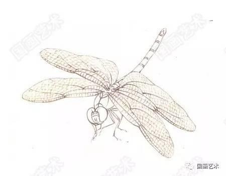 怎样画蜻蜓