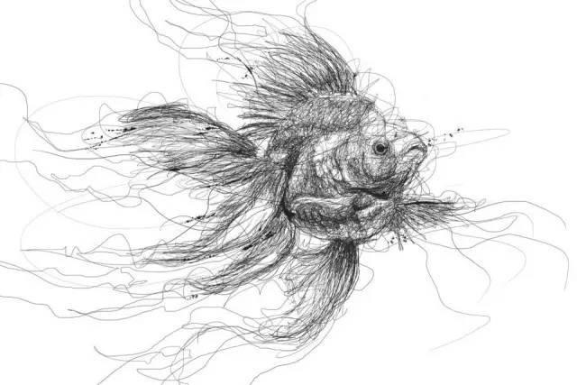 僵小鱼素描铅笔画