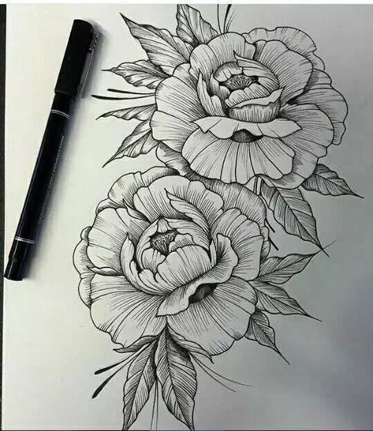 针管笔植物手绘,刚快来瞧一瞧