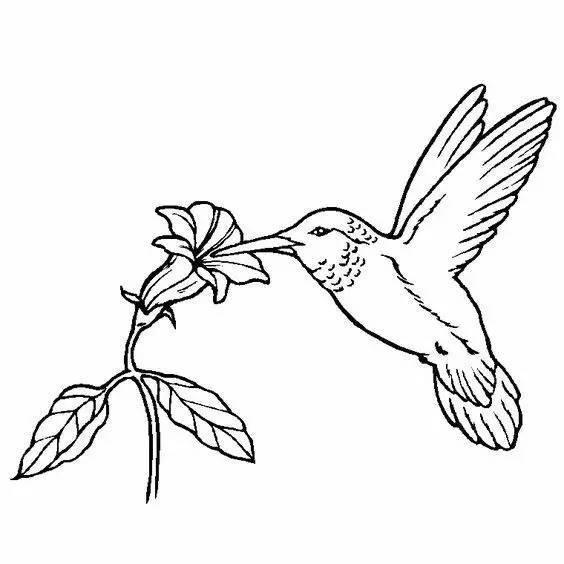 花儿与小鸟简笔画