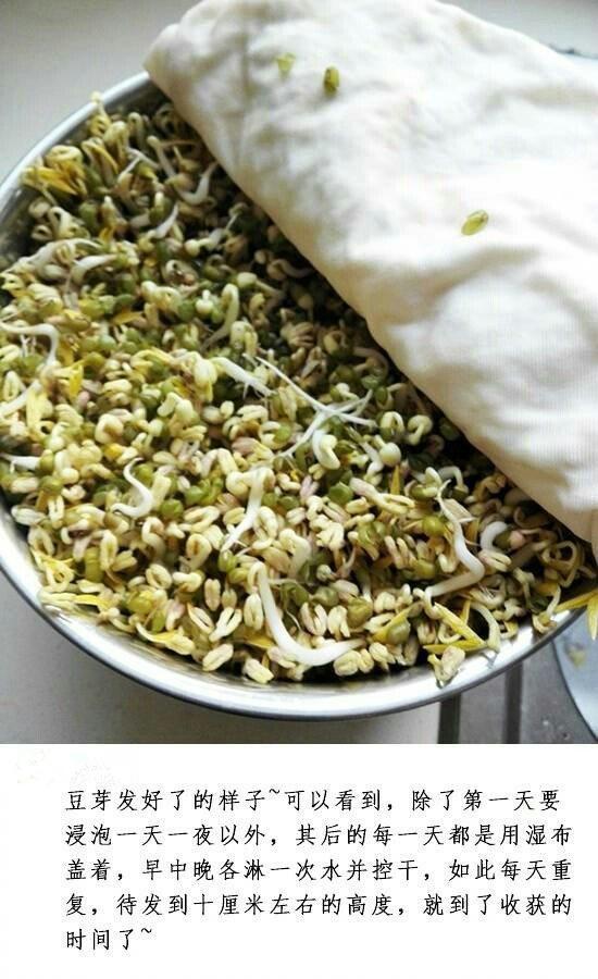 绿豆与成豆芽是什么原理_绿豆与豆芽的图片